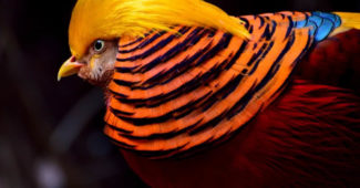 most colorful animals