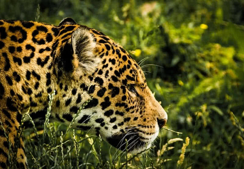 amazing wildlife destinations