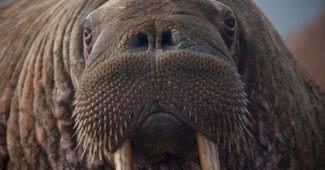 top arctic animals