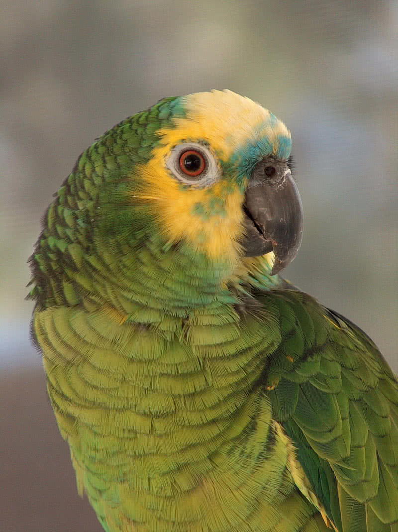 top 10 smartest talking birds in the world the mysterious world