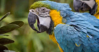 most beautiful parrots