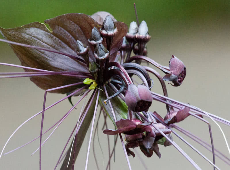 Top 9 Strange Looking Flowers In The World The