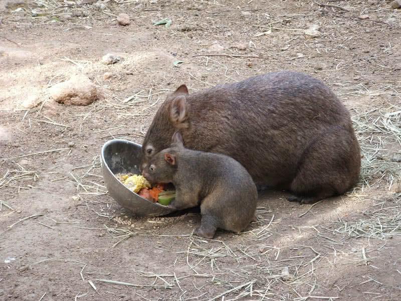 حیوانات شگفت انگیز استرالیا
