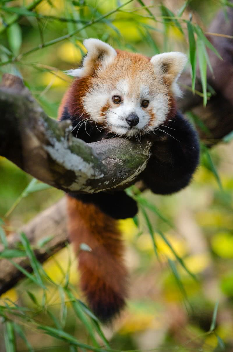 Top 10 Cutest Baby Animals In The World The Mysterious World